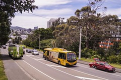 Brooklyn Road (andrewsurgenor) Tags: transit transport publictransport nzbus gowellington electric trackless trolleybus trolleybuses wellington nz streetscenes bus buses omnibus yellow obus busse citytransport city