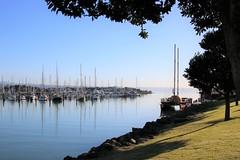 Calm morning (Karen Pincott) Tags: ahuririmarina napier water sea trees grass winter newzealand
