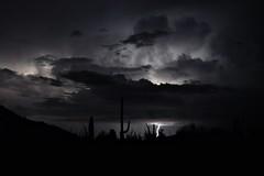 thunderstorm in the desert (markusOulehla) Tags: carnegieagigantea carnegiea arizona saguaronationalpark usa uswildlife markusoulehla oulehla nikon nikonnature nikond90 arizonalandscape saguaro cactus kaktus kakteen thunderstorm