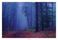 Welcome to the Forest (Max Angelsburger) Tags: steckhof niefern öschelbronn pinache niefernöschelbronn badenwürttemberg tannenberg mist fog nebel mystisch mystic green grün herbst autumn colors dark blue cold kalt dunkel blau farben 2018 woodland