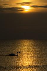 Sunrise over Baltic Sea (mirosławkról) Tags: poland nature orange water wild sun clouds sea sunrise swan bird sky summer