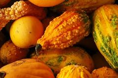harvest series 6 (S. J. Coates) Tags: princeedwardcounty fall autumn harvest vegetables colour waupoos