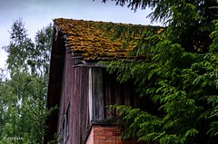 Sammalkatto (nousku) Tags: mmp suomi finland sysmä tamron buildingsarchitecture