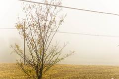 Morning mist, autumn is arriving :-) (silvia04.r) Tags: mist fog autumn autunno foschia nebbia herbst dunst