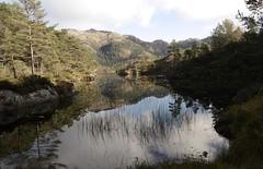 Holmedalsvatn (magneroed) Tags: holmedalsvatn lake water tjern tjørn mountains fjell reflection trees trær fitjar fitjarfjellet norway