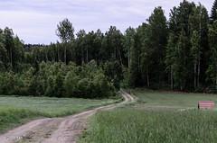 Kotipolku (nousku) Tags: mmp suomi finland landscape sysmä tamron