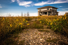 Acton, Montana (paccode) Tags: grass shack landscape bushes brush serious quiet clouds summer abandoned sunflowers tree porch creepy colorful solemn urban farm montana d850 forgotten field acton unitedstates us