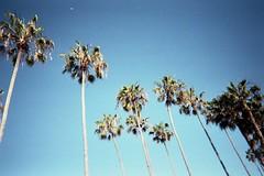 and i'm due for a light out (jesuiselouise) Tags: 35mm analog film disposablecamera california america usa spring beach sea palmtrees san diego agfa vista lofi grain lajolla