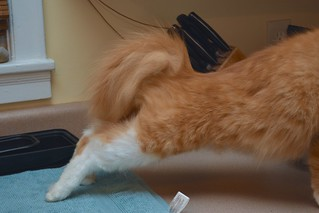 Jimmy moves nonchalantly across the counter (2 of 3)