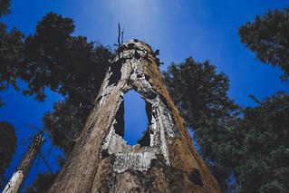 Congress Trail, Sequoia National Park