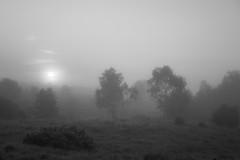 Nebelmorgen (Gret B.) Tags: nebel fog grau schwarzweis morgennebel nebelmorgen morgen morning morgens lüneburgerheide