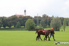 am_polo_cup18_0185 (bayernwelle) Tags: amateur polo cup gut ising september 2018 chiemgau bayern oberbayern pferd pferdesport reiter bayernwelle foto fotos oudoor game horse bavaria international reitsport event sommer herbst