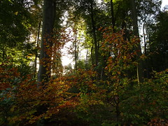 DSC01337 Spätsommer... die ersten Herbstfarben - Late summer ... the first autumn colors (baerli08ww) Tags: deutschland germany rheinlandpfalz rhinelandpalatinate westerwald westerforest wald forest spätsommer latesummer herbst herbstfarben autumn autumncolors morgensonne morningsun sonnenaufgang sunrise
