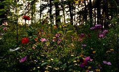 Blumenwiese (st.weber71) Tags: nikon nrw niederrhein natur bäume bunt blumen flora wiese flowers deutschland d850 germany landschaft landscape blumenwiese wärme