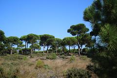 Fetais (hans pohl) Tags: portugal sesimbra meco landscapes paysages arbres trees nature