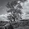 Tree & Dry stone walls - Winskill Stones North Yorkshire Dales (scon4061) Tags: northyorkshire fijifilmxe2s fujifilm14mmf28 drystonewall winskillstones