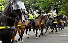 """"""" I Heard It Through The Grapevine """" (hope2029) Tags: police horse parade ride guard trees street leeds yorkshire west"""