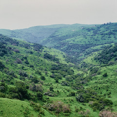 Dhofar Valley (Packing-Light) Tags: 120 6x45 mamiya6451000s analog film mediumformat kodak portra160 negative c41 reversal salalah oman middleeast dhofar mountain hills green landscape