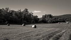 Harvest time in Vermont (CTfoto2013) Tags: gx7 panasonic collines hills field champ hayballs été summer lumiere light vermont newengland lumix blackandwhite noiretblanc bw nb monochrome