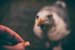 lust (Gerrit-Jan Visser) Tags: lust seagull food feeding beg rotterdam foodhall bird