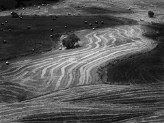 Fields of Sicily (Thunderbird61) Tags: fields autumn sicily sicilia italy italia felder landscape landgebied paysage mono monochrom schwarzweis blackwhite zwartwit noirblanc neroetblanco nigeralbus nb zw sw bw mediumformat pentax pentaxart lines