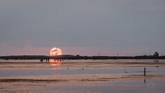 #Sunset #deltadelebre (Xavi Punset) Tags: sunset deltadelebre