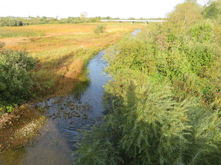 Madal vesi veeseirepäeval / Low water level on World Water Monitoring Day
