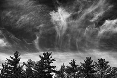 Partly Cloudy no.2 (SopheNic (DavidSenaPhoto)) Tags: trees contrast monochrome bw fuji xt2 sky blackandwhite fujifilm clouds