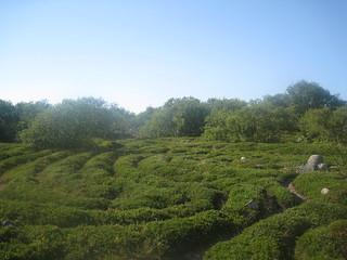another labirint