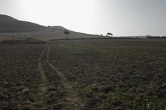 la traccia nel campo (Alberto Cameroni) Tags: calabria squillace campo controluce leica leicaxtyp113
