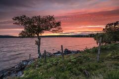 A Sunset Loner .. (Gordie Broon.) Tags: sunset lochduntelchaig lonetree invernessshire midtown dunlichity watersupply scotland landscape paysage lecoucherdusoleil ecosse caledonia inverness lac schottland sonnenuntergang scenery scozia alba silhouette thegreatglen escocia composition fence paisaje atardecer lago ferns glow essich sonya7rmkii ilce7rm2 sonyzeiss1635f4lens gordiebroonphotography landschaft tramonto szkocja scenic scottishhighlands summer 2018 august geotagged geddies