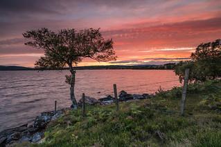 A Sunset Loner ..