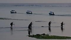 IMGP0453 Early morning fishermen (Claudio e Lucia Images around the world) Tags: matemwe zanzibar tanzania fisherman fishermen sea water fish stick clams lowtide pentax pentaxk3ii sigma sigma50500 pentaxart sigmaart bigma people africa fishing