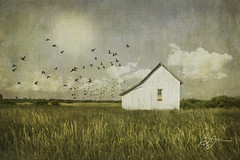 The Seed Dealer (bigtownhicks) Tags: landscape rural farmland prairie grass wheat field shed farmshed farmbuilding whitebuilding sky sunshine clouds birds flockofbirds sign seeds jacquesseeds texture digitalart painterly barbaragrether bigtownhicks