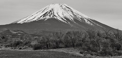 Fuji VIII (Douguerreotype) Tags: snow nature trees volcano mountain japan bw landscape