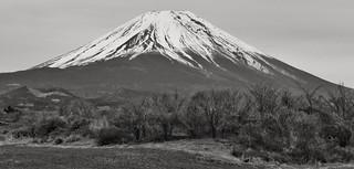Fuji VIII