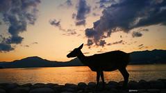 Atardecer en Itsukushima (drlekter) Tags: drlekter japan japon hiroshima sunset atardecer itsukushima deer ciervo sika miyajima buddhism photography photo colors fotografia landscape animal mountain animales sky clouds asia