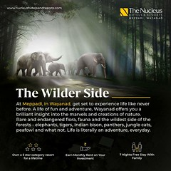 At Meppadi, in Wayanad, get set to experience life like never before. A life of fun and adventure, Wayanad offers you a brilliant insight into the marvels and creations of nature. Rare and endangered flora, fauna and the wildest side of the forests - elep (nucleusproperties) Tags: beautiful life luxuryhotel style kerala wayanad resort tourism lifestyle india luxury comfort investment nature architecture hillstation adventure interior hotel gorgeous design elegance environment beauty travel building exquisite view atmosphere