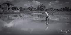 A Rice Farmer (Markus Jaschke) Tags: mono monochrome ricefield water wasser wolken clouds haus hous farmer bali spiegelung mirror asien asia men menschen people nature landscape landschaft field house feld bauer indonesien fuji fujixe3 xf27mmf28