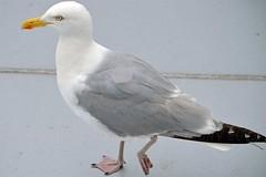 Bird (Nabil Molinari Photography) Tags: bird