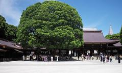 Meiji Jingu, Tokyo, Japan (Plan R) Tags: meiji shrine shinto tokyo outdoor tree people leica m 240 summilux 35mm