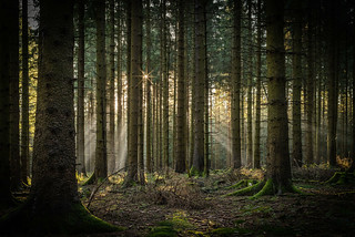 forest series #118