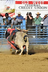 "Baker County Tourism – basecampbaker.com 47183 (Base Camp Baker) Tags: oregon ""easternoregon"" ""bakercountytourism"" basecampbaker ""basecampbaker"" ""bakercounty"" rodeo cowboys ""bakercitybroncandbullriding"" ""bakercity"" ""oregonrodeo"" ""minersjubilee"" oregonrodeo ramrodeo traveloregon travel tourism roughstock rodeolife bulls bullriding"
