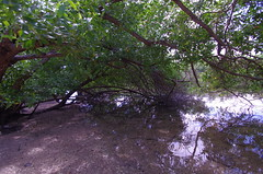 Whiskey Creek Reflections (erluko) Tags: daniabeach tamronspaf1024mmf3545diii trees reflections water creek whiskeycreek sand