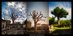 collage tilleul (Pascal Rey Photographies) Tags: ags arbres árboles arboristegrimpeurspécialisé arboriste pascalreyphotographies