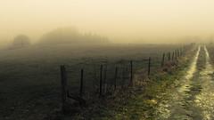 Contrast Fence (Netsrak) Tags: baum eu europa europe forst januar january landschaft natur nebel wald fog forest landscape mist nature tree trees winter woods bäume rheinbach nordrheinwestfalen deutschland de fence zaun