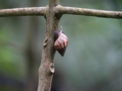 蝸牛 (enno7898) Tags: panasonic lumix g9 lumixg9 vario 45200mm f4056 snail