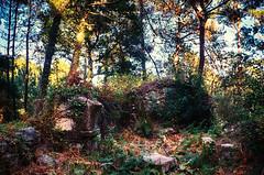 Noise (The North West Of Nowhere) Tags: tensk acoruña sanbieto capela capilla chapel abandoada abandonada abandoned
