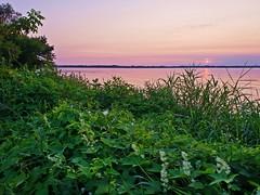 Summer in full bloom (gregor_kampus) Tags: woda słońce lato relaks wieczór rośliny