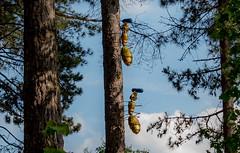 """""""Ailleurs"""" (picsl.art) Tags: installation artwork parcfloral paris art fourmis ant robledo moreno arbre ciel bois"""